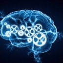 Digital Human Brain for Studying Cognitive Psychology | Careers in Psychology