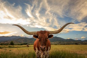 Texas Psychologist Licensing, Education and Certification